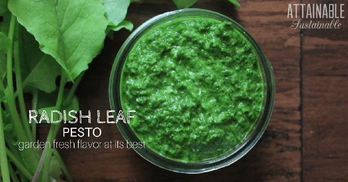 radish pesto in a glass jar - These radish recipes are simple and delicious (and best of all, they'll make you actually WANT to eat your veggies!) Give them a try for a colorfully peppery crunch.