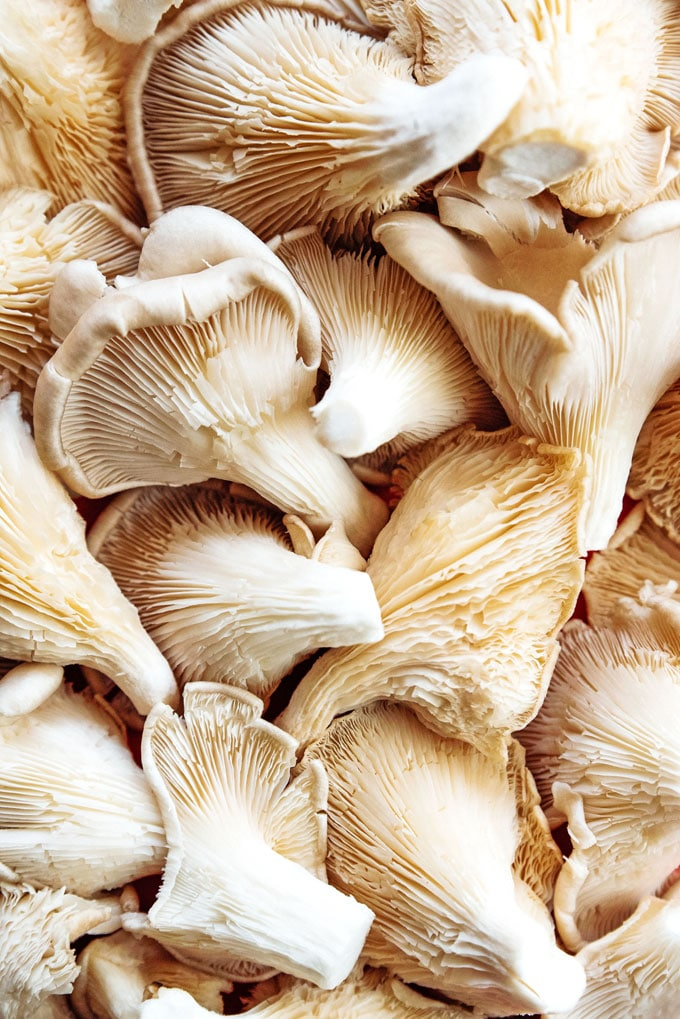 Close up photo of pearl oyster mushrooms