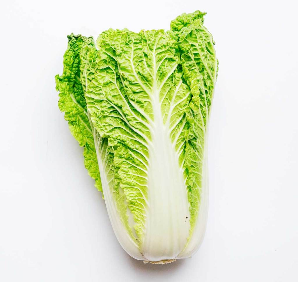 Whole napa cabbage on a white background