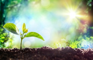 Growing Sprout – Beginning Of A New Life