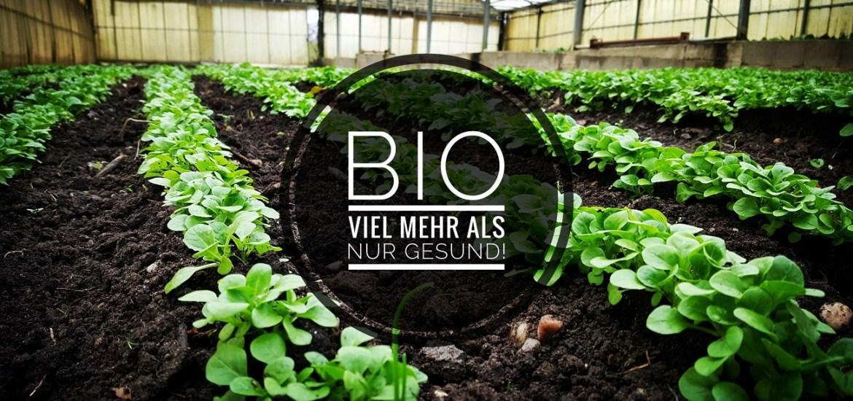 Bio-angewandter Klimaschutz