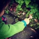 #darumgrüner-Mein Freund die Fliege-Schnecke