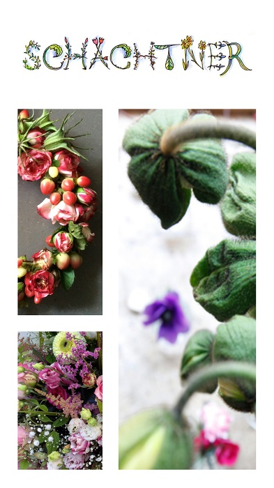 Nachhaltige Blumenläden in München: Blumen Schachtner