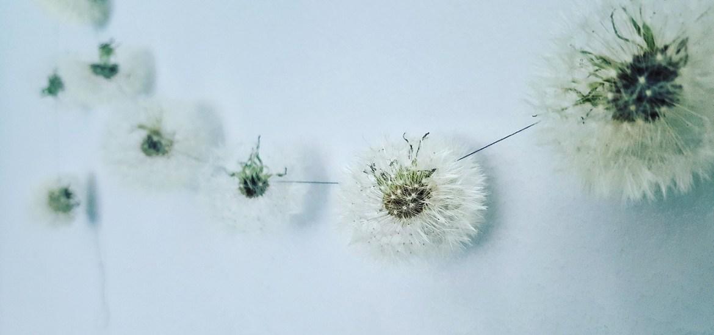 Pusteblumen-Girlande: Pusteblumen haltbar machen und in zauberhafte Deko verwandeln
