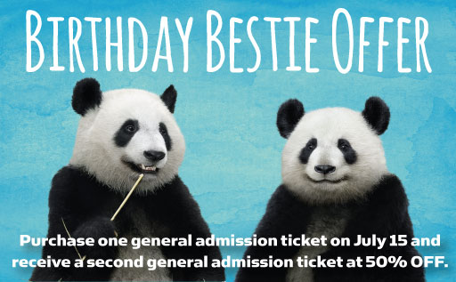 panda_birthday2016_home_bestie-offer