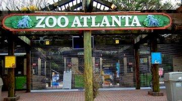atlanta-zoo