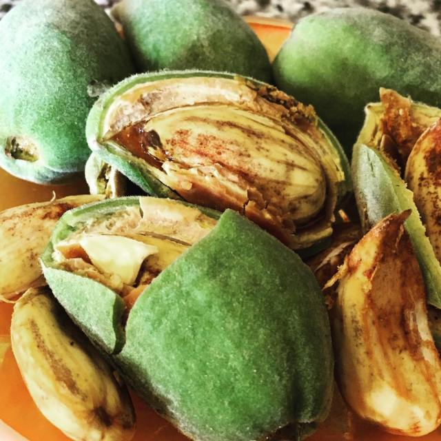 Anybody guess what these guys are? Fresh almonds off ourhellip