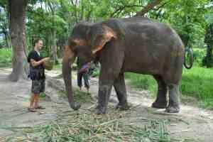 patara elephant farms