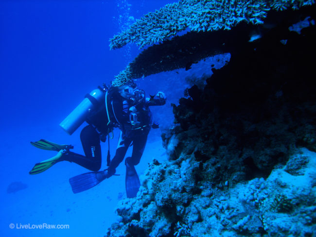 Anya Andreeva scuba diving looking at coral at Ras Bob in Egypt