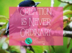 Creation Is Never Ordinary