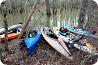 Kayaks In Swamp