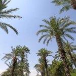 Palm springs hidden gems