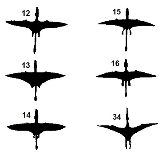 "Devin Rhodriquez chose these six images as similar to the ""pterosaur"" she observed flying just east of Griffith Park, Los Angeles, on May 13, 2013"
