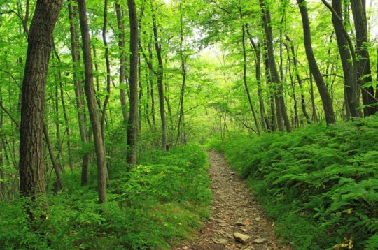 green forest and ferns in Pennsylvania