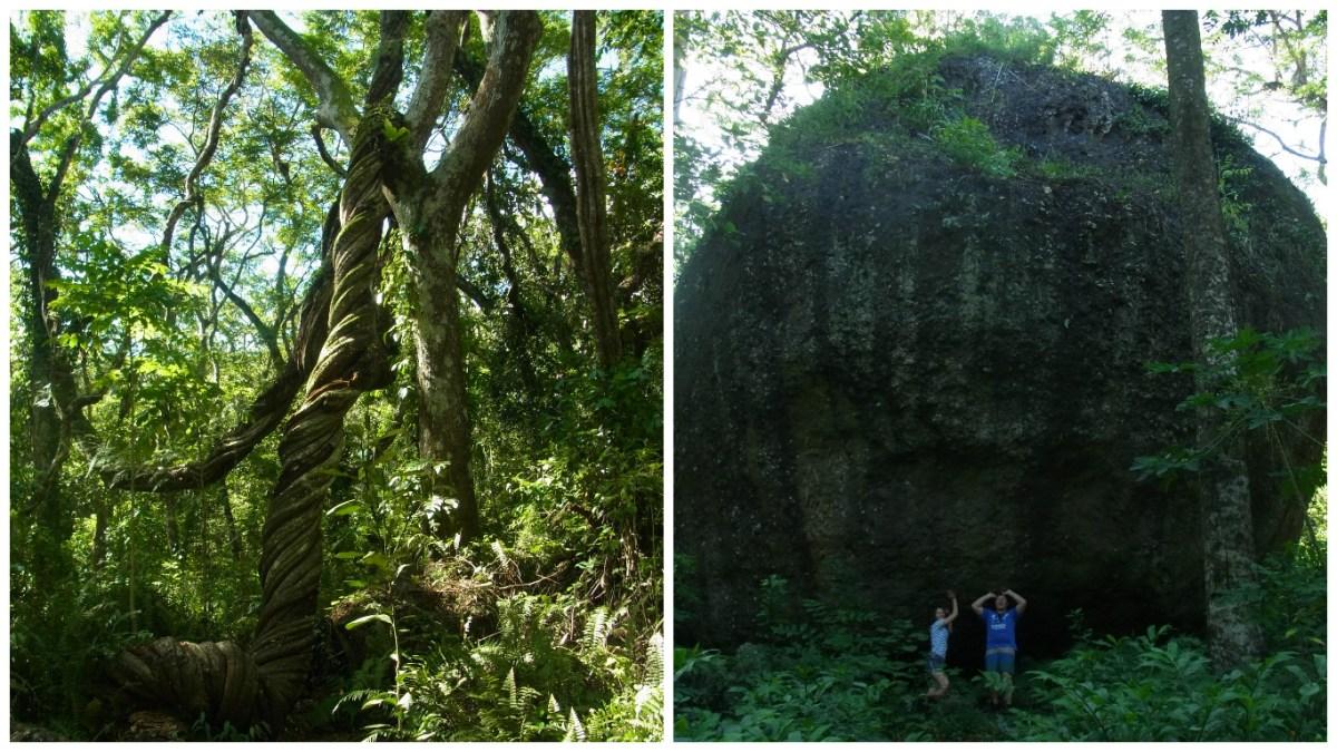 Rainforest Fiji