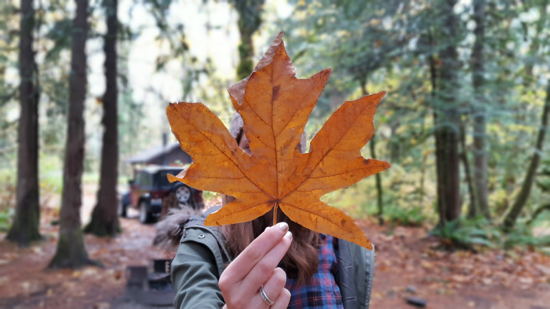 Falling for fall in the Pacific Northwest - LiveRecklessly.com