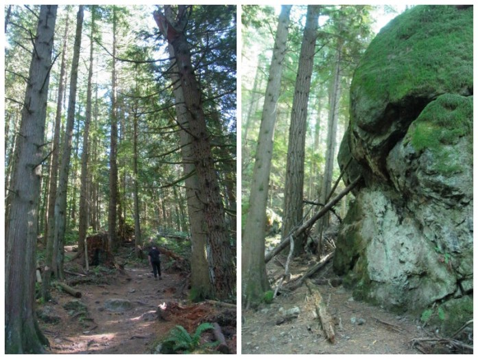 Oyster Dome trail