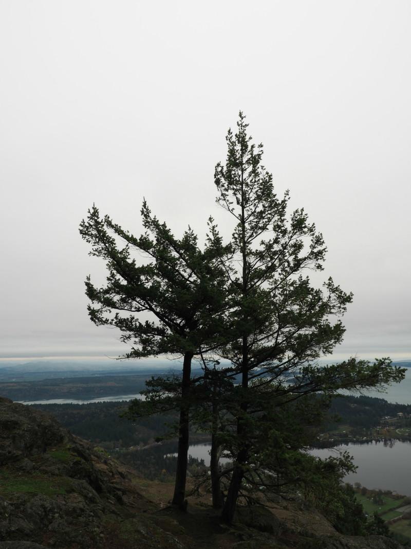View from Mt Eerie, Fidalgo Island