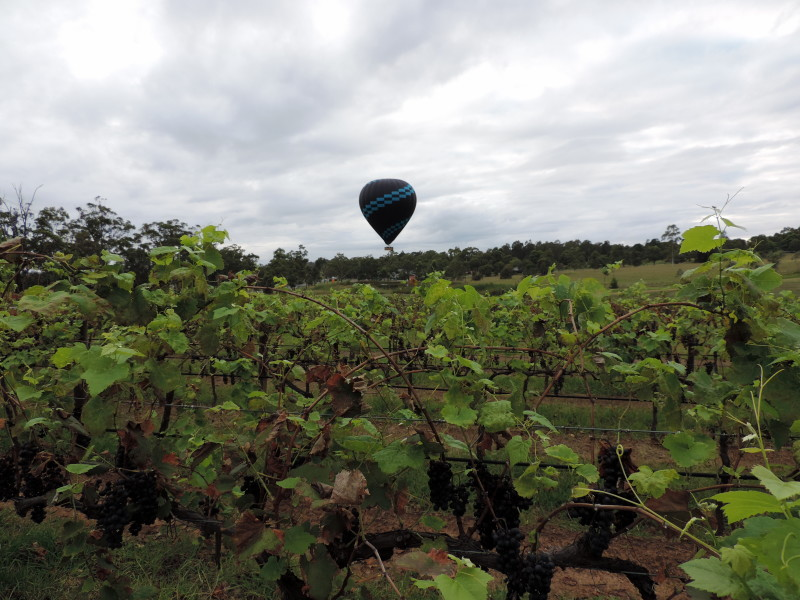 Hot Air Ballooning Hunter Valley - LiveRecklessly.com