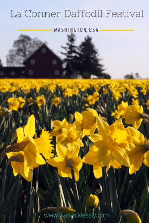 Every March, Washington's Skagit Valley bursts to life for the La Conner Daffodil Festival. See my photos and find out how to experience the festival for yourself! Read more at www.liverecklessly.com #USA #WashingtonState #LaConnerDaffodilFestival