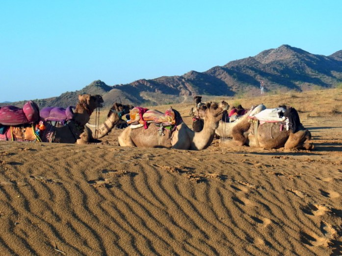 India in photos: Camel safari India Thar Desert - LiveRecklessly.com