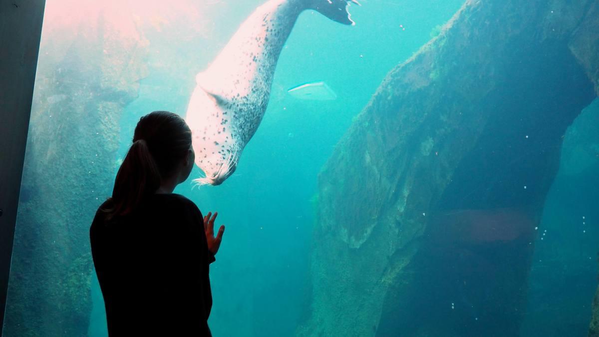 Alaska in Photos - rescue seal at SeaLife Seward - Live Recklessly