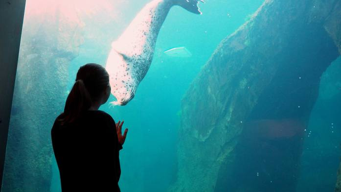 Alaska in Photos - rescue seal at SeaLife Seward - Live Recklessly
