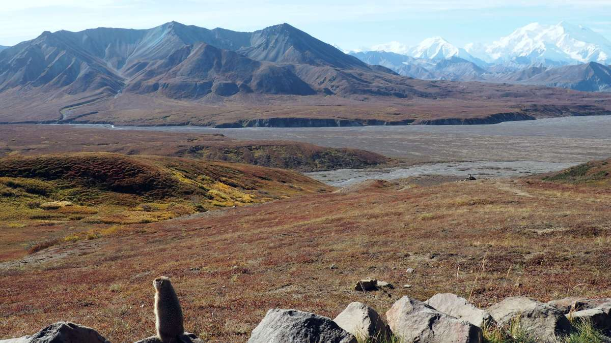Alaska in Photos - taking in those Denali views - Live Recklessly