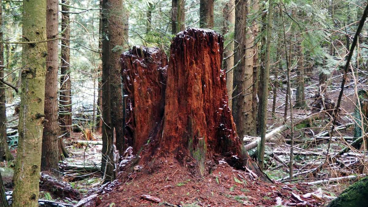 Save Blanchard Mountain Washington - Live Recklessly