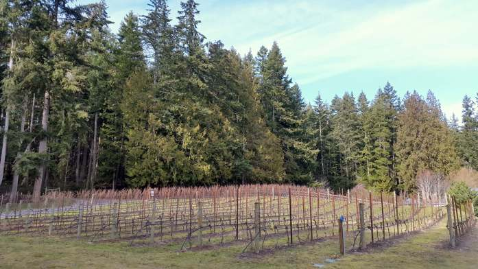 Expat Escapades February 2017 - Whidbey Island Wine Trail - Live Recklessly (2)
