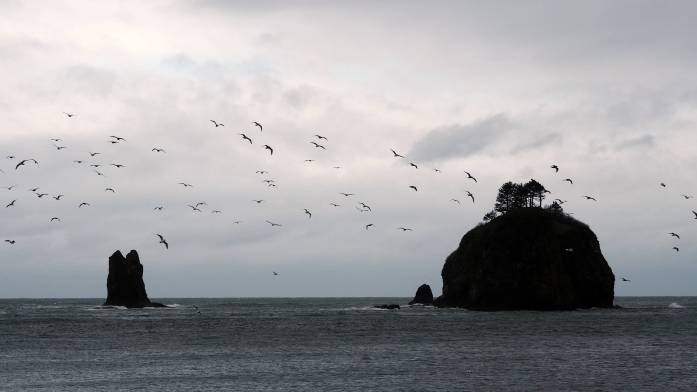 La Push First beach - An Olympic National Park road trip - Live Recklessly