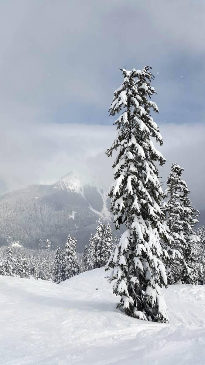 Mt Baker snow covered trees - Live Recklessly
