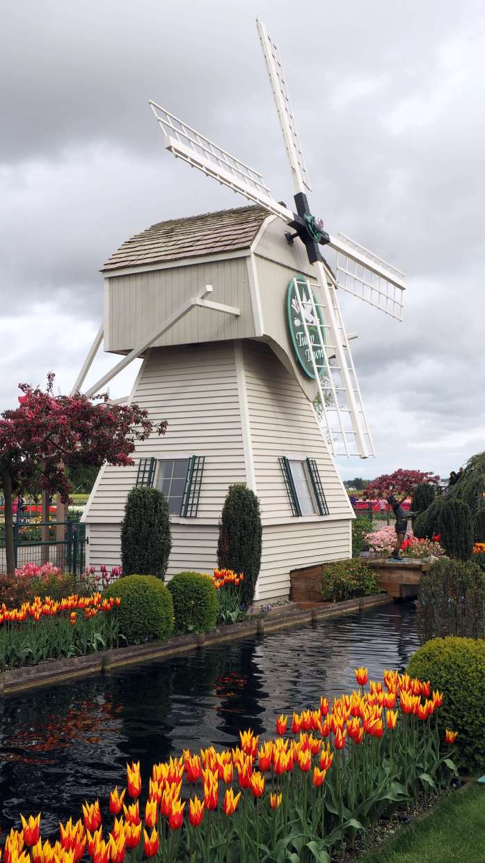 Windmill at Tulip Town Skagit Valley