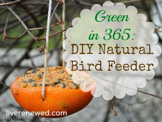 Diy Bird Feeders Pinterest