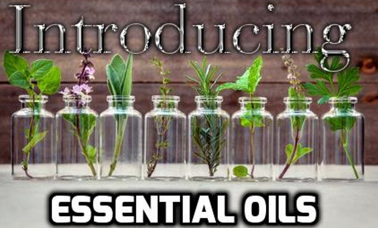Essential Oil bottles with their leafy components