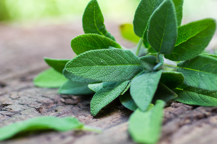 Sage leaves on a wooden table