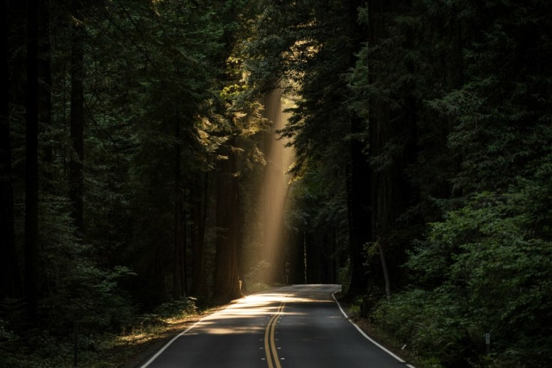 A beautiful road in the woods with a shaft of sunlight peeking through. A lot like on the road to Damascus.