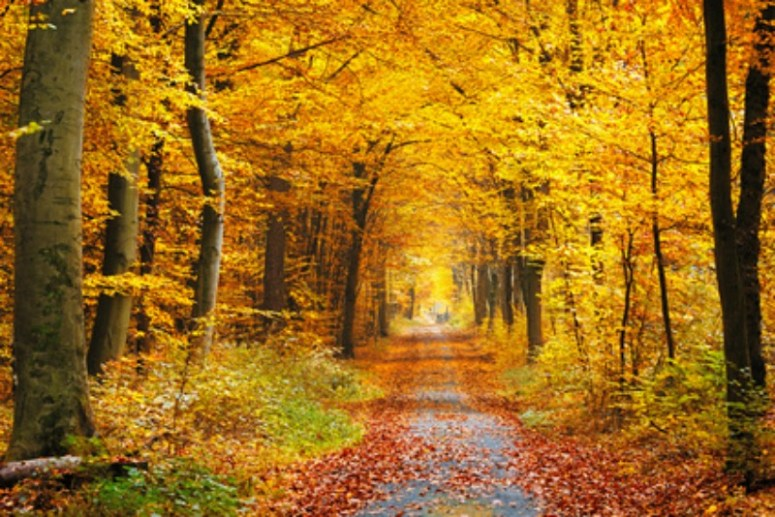 Beautiful country path in Autumn splendor