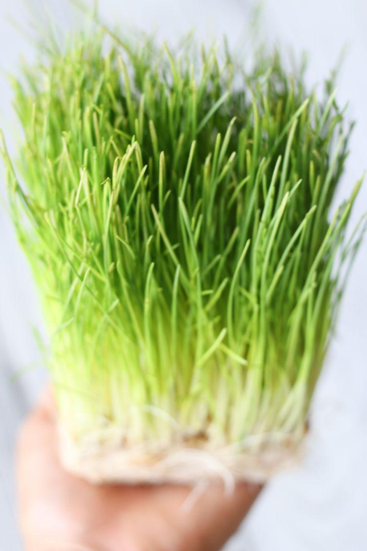 Wheatgrass Lemon Tonic Live Simply Natural