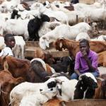 ram business in nigeria