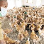 making money from poultry