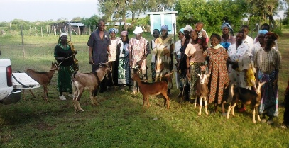 Delivering dairy goats to a group