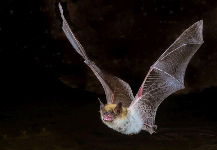 Κοροναϊός: Για δεκαετίες στις νυχτερίδες ο ιός;