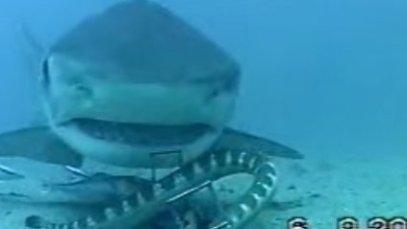 n-SNAKE-SHARK-large570