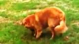 Μάλωσε τον Σκύλο της επειδή τον έπιασε να σκάβει το Γρασίδι. Η Αντίδρασή του; ΕΠΙΚΗ..!