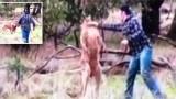 Άντρας ρίχνει μπουνιά σε καγκουρό για να σώσει τον σκύλο του.
