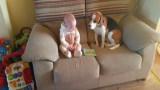 Έβαλαν το Νεογέννητο Μωρό να Κάτσει για Πρώτη Φορά δίπλα στον Σκύλο. Οι αντιδράσεις τους; Θα σας Φτιάξουν τη Μέρα!
