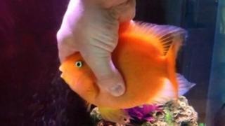 Δείτε ΤΙ κάνει και ΠΩΣ αντιδράει αυτό το Ψάρι Κάθε Φορά που Βλέπει τον Ιδιοκτήτη του και ΔΕΝ θα Πιστεύετε στα Μάτια σας! (Βίντεο)