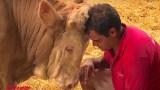 Ταύρος ήταν αλυσοδεμένος όλη του τη ζωή, η συγκινητική αντίδραση του όταν τον απελευθερώνουν έγινε παγκόσμιο viral [Βίντεο]