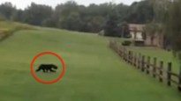 Couple-Was-Running-Away-From-A-Wild-Animal-Until-They-Noticed-Something-Weird-On-Its-Head.-So-They-Turned-Around…